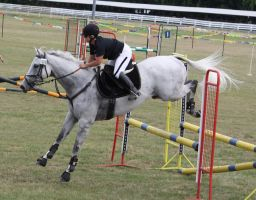 STOCK Showjumping 452 by aussiegal7