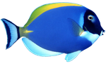 Blue Fish png by mysticmorning