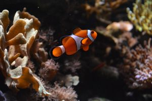 I found Nemo by BabemRoze