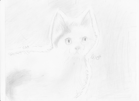 RL cat picture (Old brightheart) by littletea10