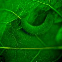 Feel the green by Nile-Paparazzi