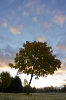 Tree and Sky by ravenandwren