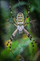 Spider and web by ForrestBump