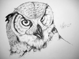 Owl by elfythegreat