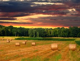 Sunset on a field by niwaj