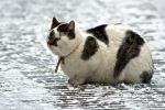 Fat Cat in the snow by swrut