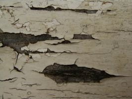 Wood 03. by Imaginationsis