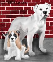 Bulldogs by Navina