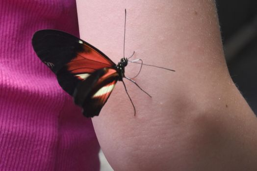 Welcome Friend, Butterfly On the Arm by Miss-Tbones