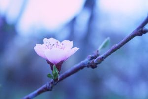 - Spring time 5 by Mme-Oui