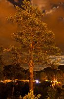 Night Tree by sequential