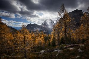 glowing larches by jaelise