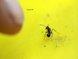 Ant attack stance 2 by sidneyj06