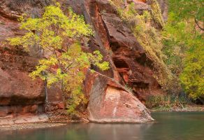 Cottonwoods in the Narrows by madrush08