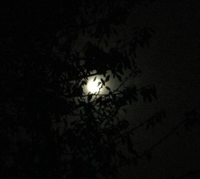 Moon and some branches by Stidl