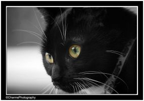 Nosey Cat by CharmingPhotography