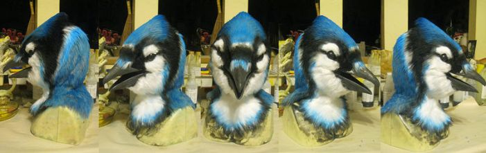 Blue Jay! by Crystumes