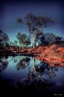 River Red Gum by godintraining
