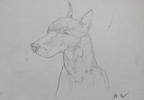 Doberman by Carlitos-Girl