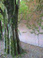 Trees at the graveyard 03 by 333half-evil-stock