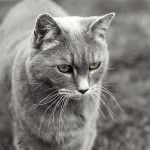 Whiskers by dl-p