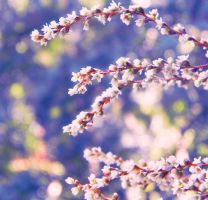 bokeh branch by Iridescent-happinesS