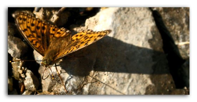 Butterfly by The-Photographers
