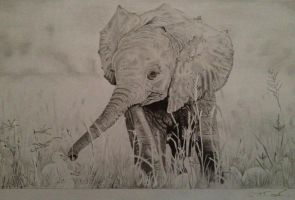 Baby Elephant Playing With Ducks by ctcoops