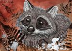 racoon and fern by Schiraki