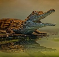Baby Croc by deoroller