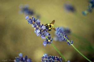 The Bee Knows by AngelaLeonetti