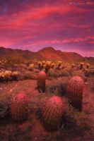 Pink Panther by PeterJCoskun