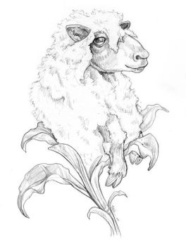 Vegetable Lamb by ursulav
