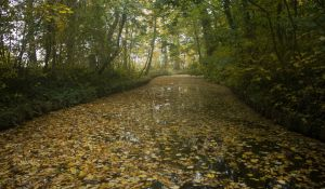 Autumn Leaves in the Water by Danimatie