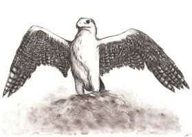 india ink: eagle by zimtxstern