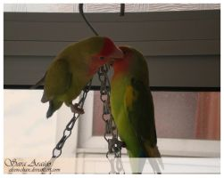 Lovebirds' Love by Sara-Araujo