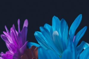 More flowers by speedofmyshutter