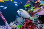 Coral Reef and Fish Stock by GloomWriter