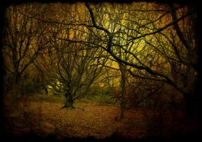 the wild wood by awjay