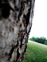 Tree by 7LM