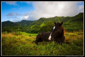 Horsing Around by aFeinPhoto-com