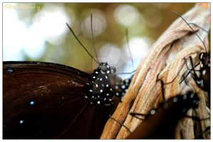 Butterfly by ToothlessEOD