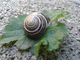 Snail 4 by MasterTeska