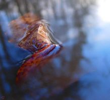 Les dents de la flaque by dr-snoggle