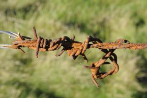 barb wire four by density-stock