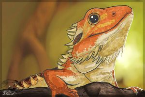 Bearded Dragon by Rabentag