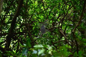 Deep Forest Bird by BioVenomImagery