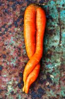 Twinned Carrot by lamorth-the-seeker