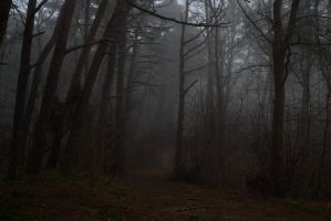 Fog in the forest 5 by Risandell