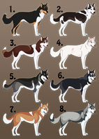 Point Auction- Siberian Huskies 2 CLOSED by ShockTherapyStables